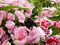 Bee on flowers.jpg