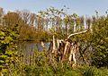 Beekdal Linde Bekhofplas. Een waardevol natuurterrein van Staatsbosbeheer in de provincie Friesland 16.jpg