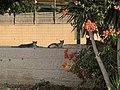 BeerSheba River Park IMG 2403.jpg