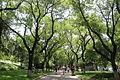 Beihai Park 01.JPG