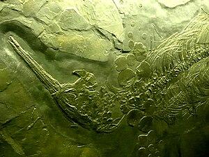 Besanosaurus - Besanosaurus