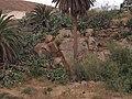Betancuria, 35637, Las Palmas, Spain - panoramio (135).jpg
