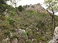 Between Ayannis and Anavriti - panoramio - macrolepis (2).jpg