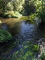 Bickerley Mill Stream - geograph.org.uk - 1540896.jpg