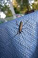 Big beetle (7994909896).jpg