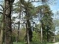 Bila Tserkva, Kyivs'ka oblast, Ukraine - panoramio (59).jpg