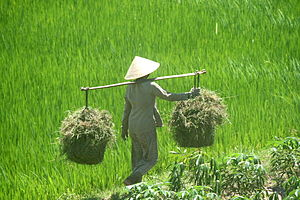 South Central Coast - Farmer in Bình Định Province