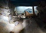 Biologiska museet interiör nov 2013 08