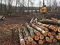 Birch Grove Campground - Chequamegon-Nicolet National Forest - 2.jpg