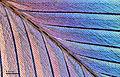 Bird feather (248 20).jpg