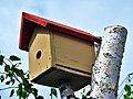 Bird house - panoramio (2).jpg