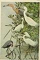 Bird lore (1922) (14564420040).jpg