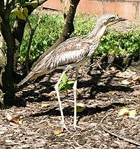 Bird on South Molle Island.JPG