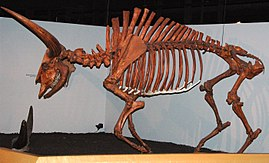 Sex of fossil bison