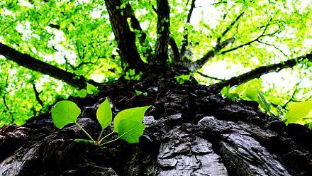 Ugljik datira doba stabala