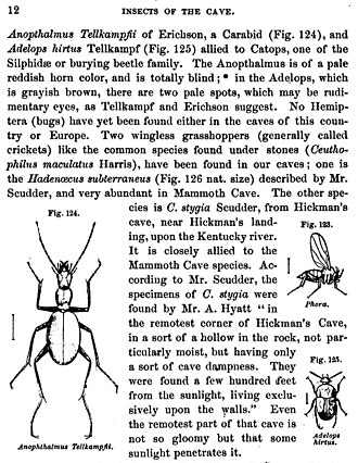 The eclipse of Darwinism - Alpheus Spring Packard's 1872 book Mammoth Cave and its Inhabitants used the example of cave beetles (Anophthalmus and Adelops) that had become blind to argue for Lamarckian evolution through inherited disuse of organs.