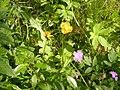 Blommor vid Stuorraäytsi.jpg