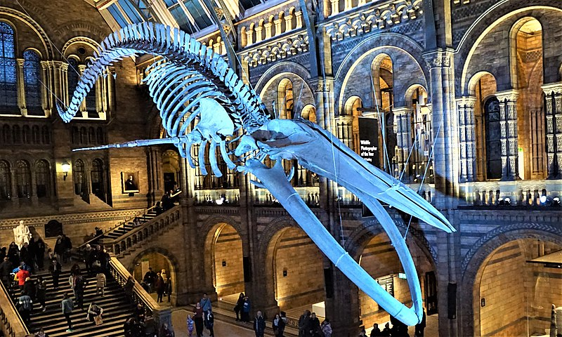 London Family Trip: 8 Perfect Travel Ideas For Kids
