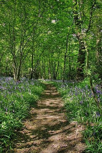 South Benfleet - Image: Bluebellswood