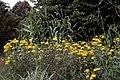 Border flowers in the Gravel Garden of Goodnestone Park Kent England.jpg