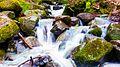 Borjomi Nature Reserve.jpg