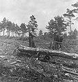 Bosbewerking, arbeiders, boomstammen, vervoeren, dieren, paarden, Bestanddeelnr 251-8486.jpg