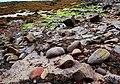 Boulder beach - geograph.org.uk - 1267171.jpg