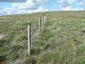 Boundary fence and stone, Wham Head, Marsden - geograph.org.uk - 851144.jpg
