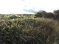 Bramble hedge in low November sunshine - geograph.org.uk - 1568871.jpg