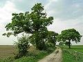 Bridleway - geograph.org.uk - 414405.jpg