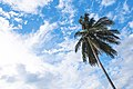 Bright, white clouds (Unsplash).jpg