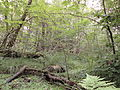 Bryngarw Country Park, Wet woodland 3.jpg