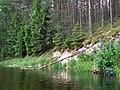 Brzeg Piławy - panoramio.jpg
