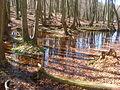 Buchenwälder zum Träumen schön.JPG