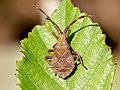 Bug sp (31309994238).jpg