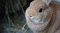 Bunny (5767988338).jpg