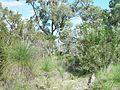 Bushland Tamala park.jpg