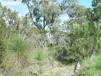 Bushland - Bushland in Western Australia