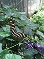 "Butterfly farm ""Parque Ecológico Chapultepec"".jpg"