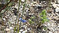 Butterfly heaven...for me. (43781362160).jpg