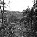CH-NB - Belgisch-Kongo, Thysville (Mbanza Ngungu)- Landschaft - Annemarie Schwarzenbach - SLA-Schwarzenbach-A-5-26-015.jpg
