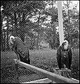 CH-NB - Litauen, Kaunas (Kowno)- Tiere - Annemarie Schwarzenbach - SLA-Schwarzenbach-A-5-16-154.jpg