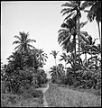 CH-NB - Portugal, San Thomé (São Tomé und Príncipe)- Landschaft - Annemarie Schwarzenbach - SLA-Schwarzenbach-A-5-25-007.jpg