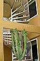 Cactus, Seaside Condo, Santa Monica (3671692512).jpg