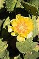 Cactus Chicago Illinois 8582.jpg