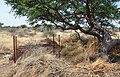 Cage trap on a farm, Namibia.jpg