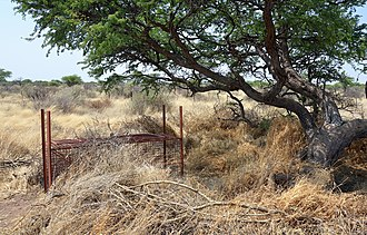 Cage trap (live trap) for cheetahs on a farm in Namibia Cage trap on a farm, Namibia.jpg