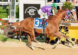 California Chrome - California Chrome winning the 2014 Preakness Stakes