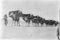 Camel Caravan to Mecca, 1910.tif