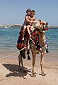 Camel on the beach 3.jpg